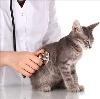 Ветеринарные клиники в Большеустьикинском